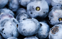blueberry_small