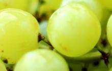Druiven-boerenkool-2